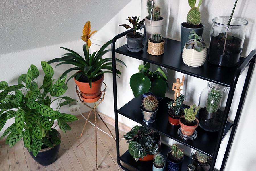 reol til planter