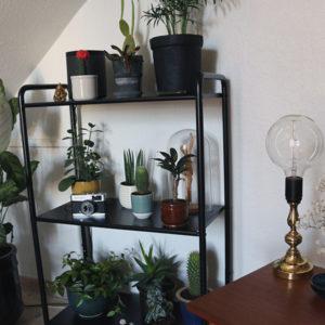 Ny reol til planter