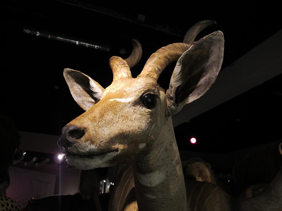 NaturhistoriskMuseum8