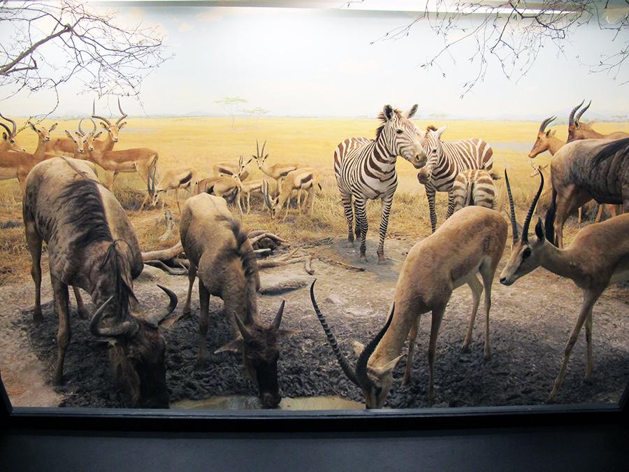 NaturhistoriskMuseum9