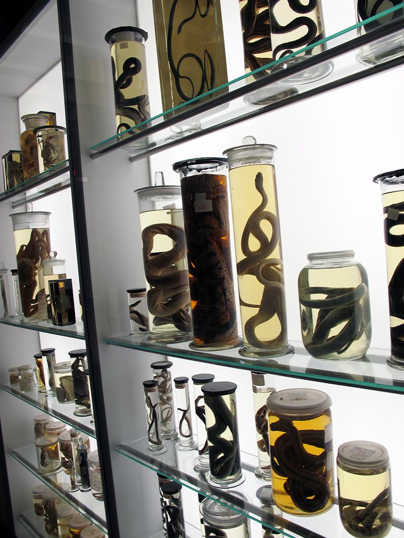 Naturhistoriskmuseum3