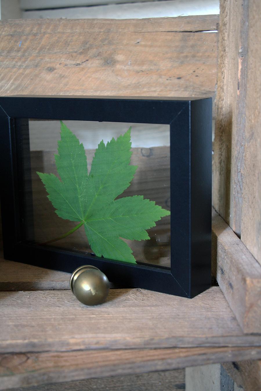 grønt bag glas2